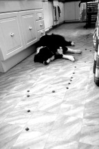 The trail of dog food Miss left for Bilbo.