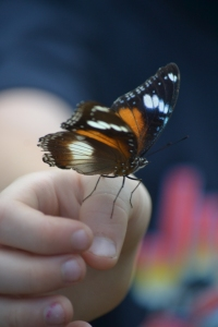 Close encounter with a butterly.