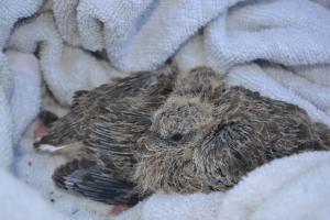 The bay birds sitting on their towel nest
