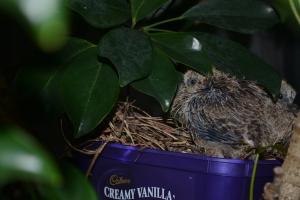 Old nest...new nest