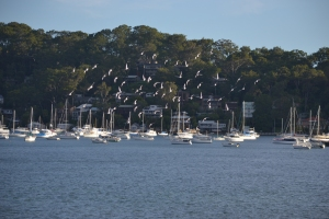 View of Careel Bay and local racing pigeons.