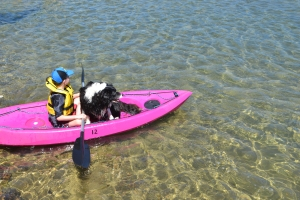 Mister kayaking along with all 40+ kilos of Bilbo our Border Collie...the calm before the splash.