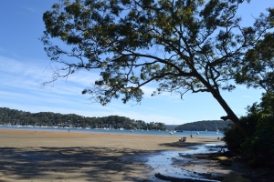 Dark Gully, Palm Beach looking out onto Pittwater at low tide.