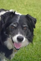 Bilbo our dog