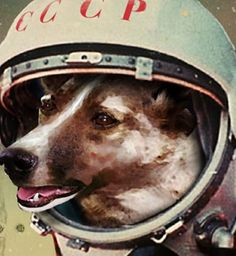 Laika the first dog in space. While in some ways a hero, she was killed in the name of science, which we obviously don't condone.