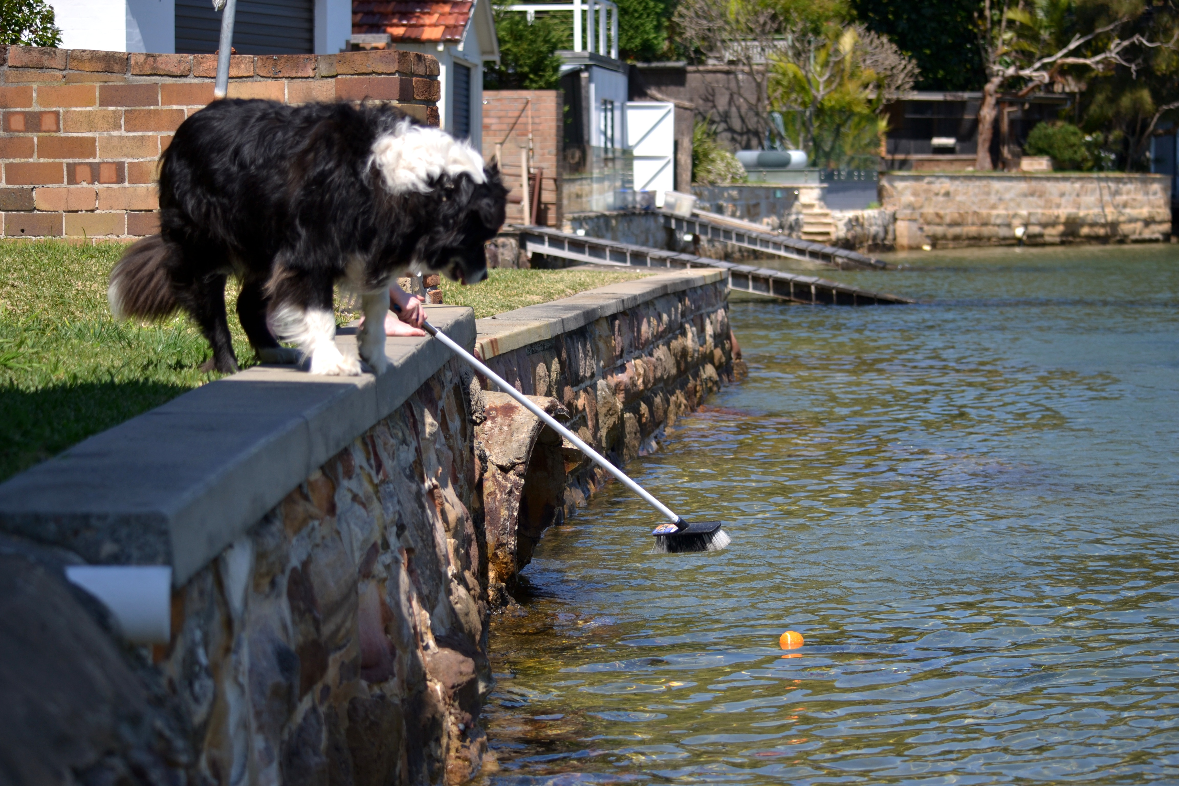Fetching Bilbos Ball