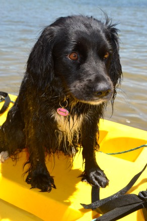 Move over Huckleberry Hound. Lady enjoying her kayak adventures.