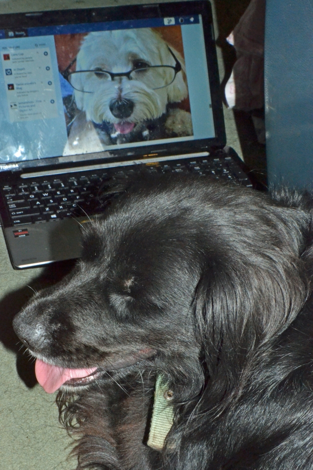 Lady chatting with Max online.