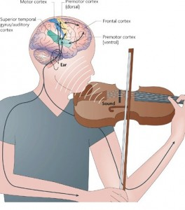 Diagram showing brain activation while playing the violin.