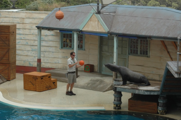 Seal Show, Taronga Zoo.