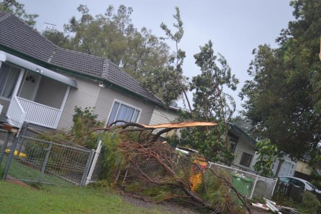 Fallen tree branch down the street.