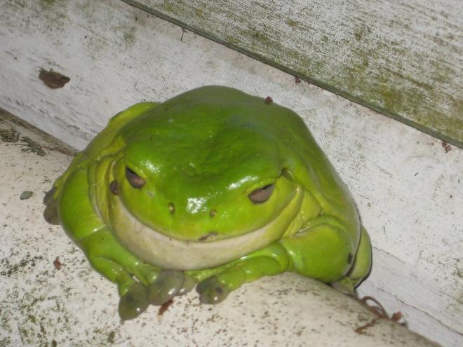 Freddie the Front Door Frog.