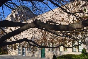Oak Tree, Australian War Memorial, Canberra.