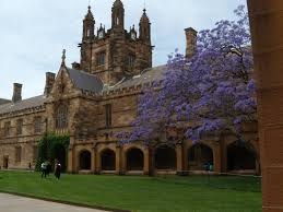 The historic sandstone building in the Main Quadrangle featuring the iconic Jacaranda tree which was planted in 1927 by EG Waterhouse. The tree is an unfortunate harbinger of bad news. As it's branches start to bud, exam time is looming.