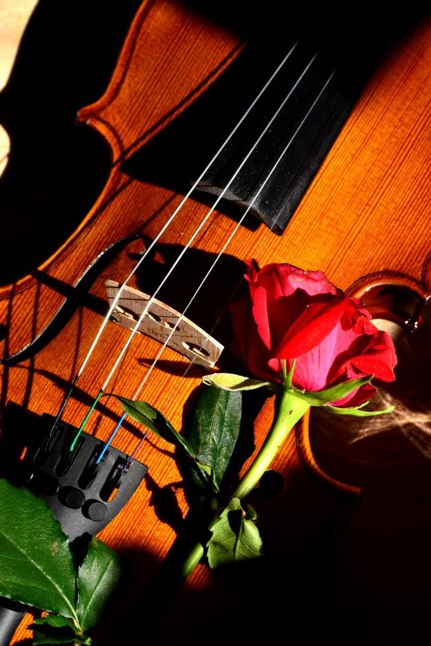 Violin rose