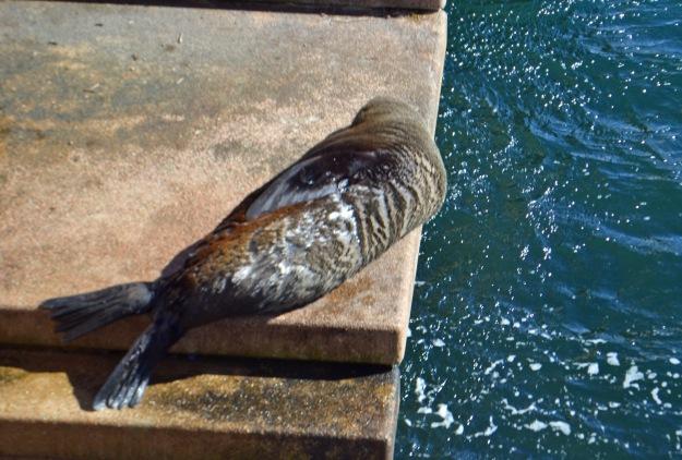 Sydney's Celebrity Seal.