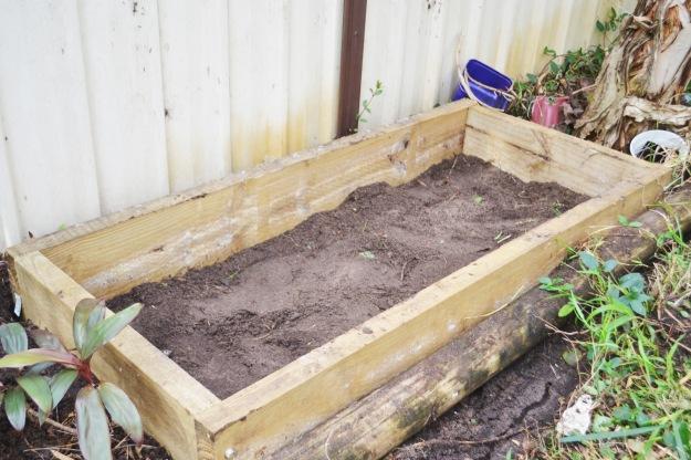 veggie patch beginnings