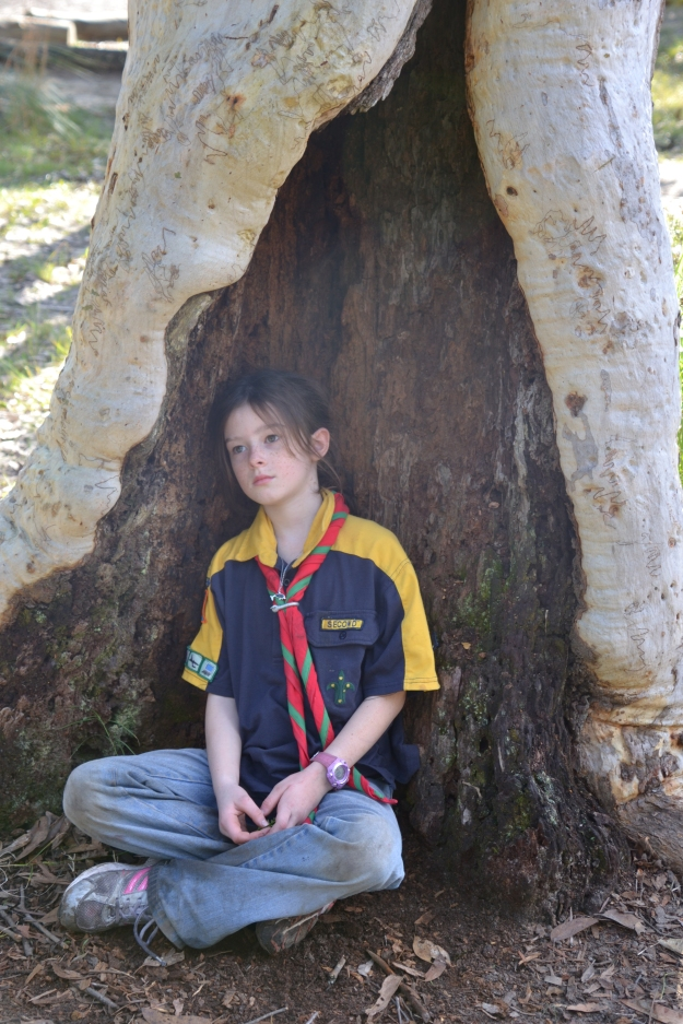 Looking a bit tired but putting up with posing for photos inside the trunk of a scribbly gum.