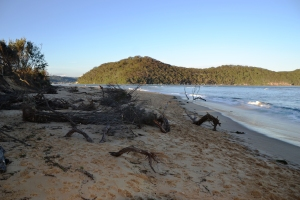 Trees have been uprooted and strewn along the beach and buried in a sandy grave.