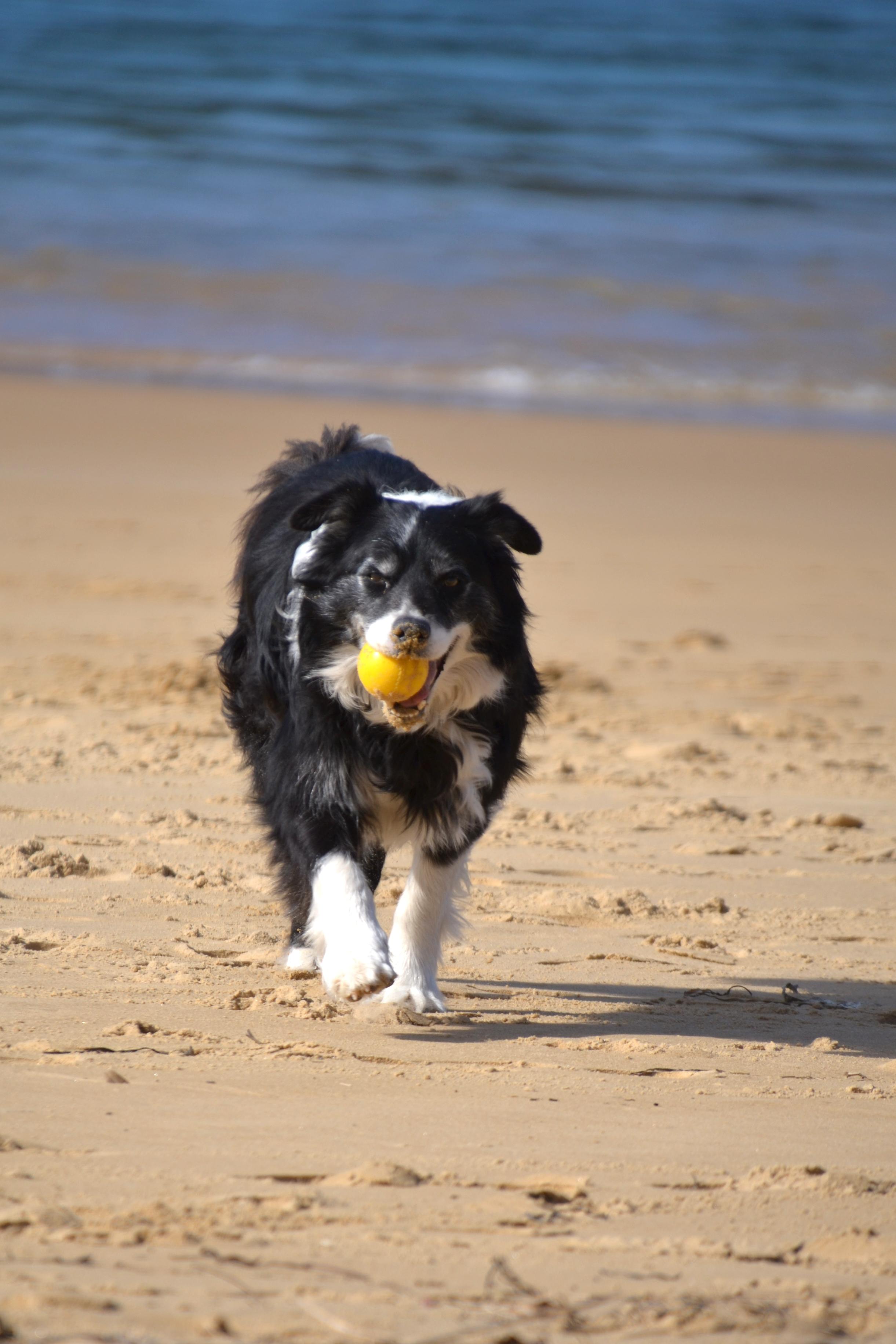 Bilbo with ball