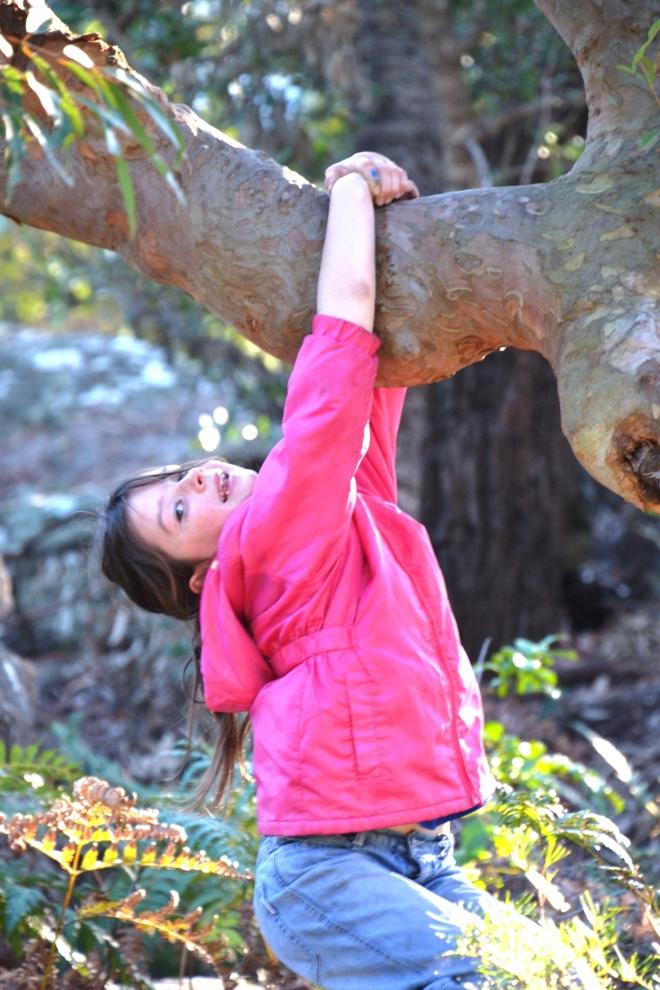 Who doesn't love to climb a tree?