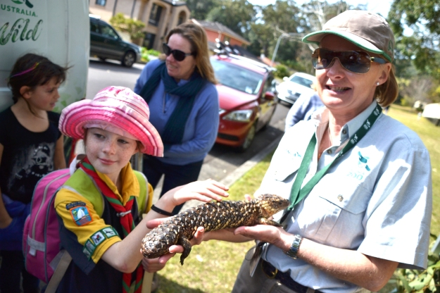 Our daughter pats a Shingleback Lizard