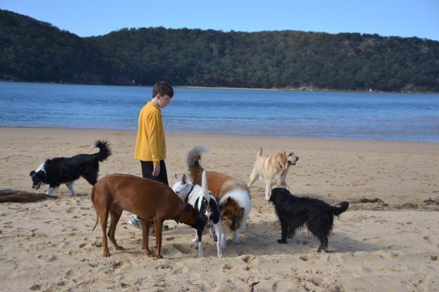 Welcome to Dog Beach!