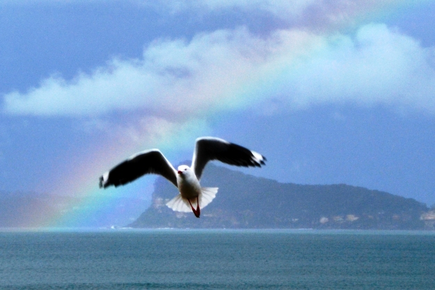 Jonathon Livingston Seagull Finds His Wings!