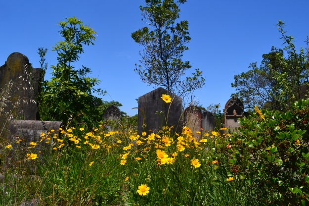 Gore Hill Cemetery in Bloom.
