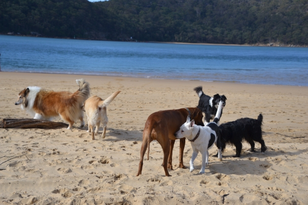 A few of the characters at Dog Beach.
