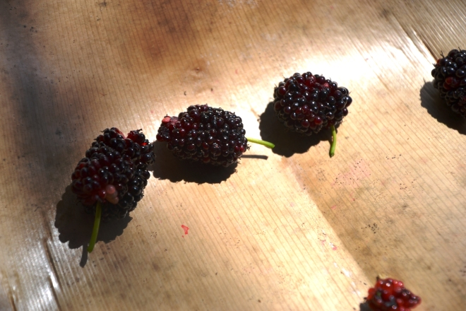 Yummy mulberries.