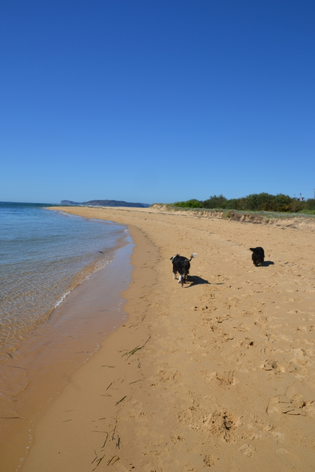 I've taken the dogs for a few beach walks this week.