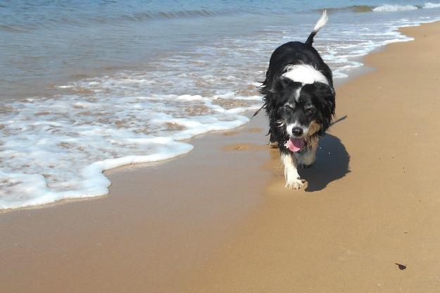 Bilbo walking beach