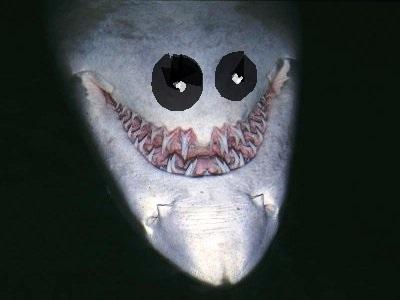 Shark Smile2