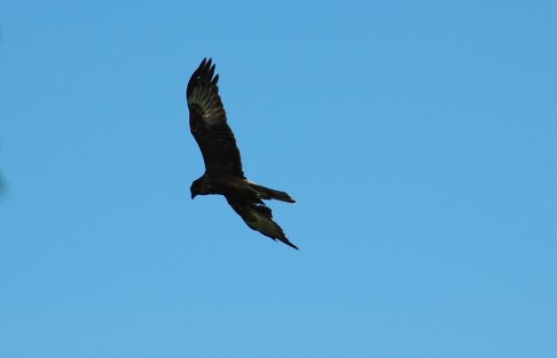 eagle zoom