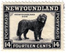 newfoundlanddogstamp