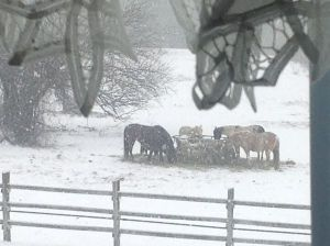 horses-in-snow-rochelle-wisoff-fields