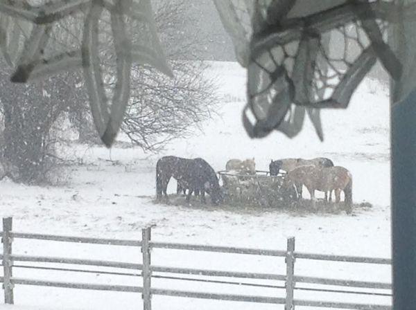 horses-in-snow-rochelle-wisoff-fields