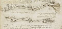 Da Vinci arm