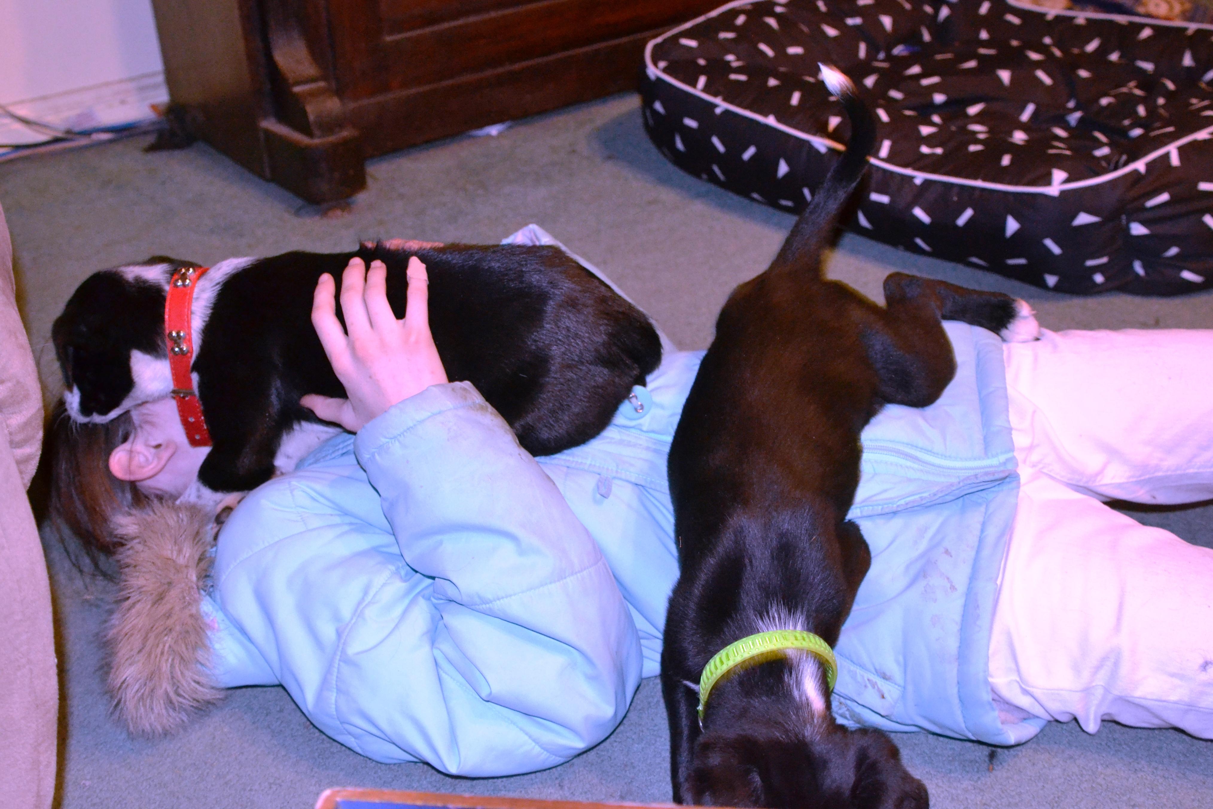 Amelia with crazy pups