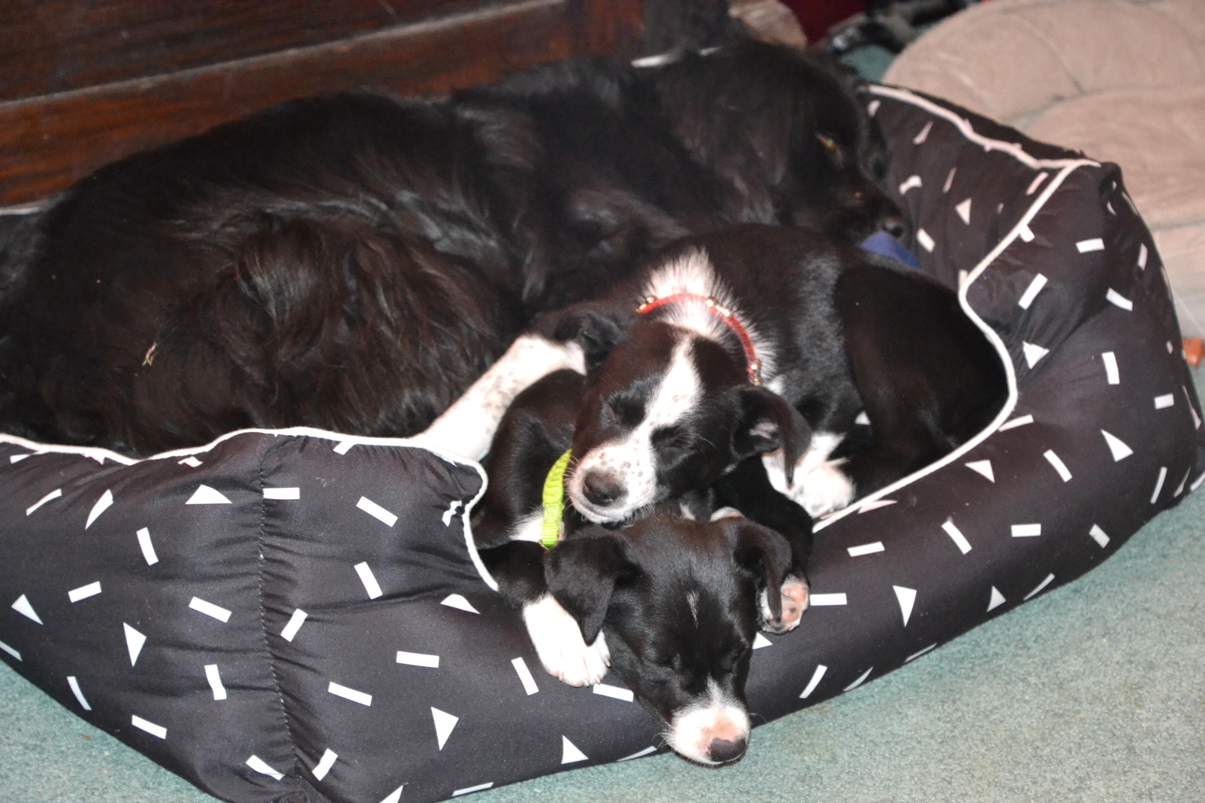 Lady & pups sleeping