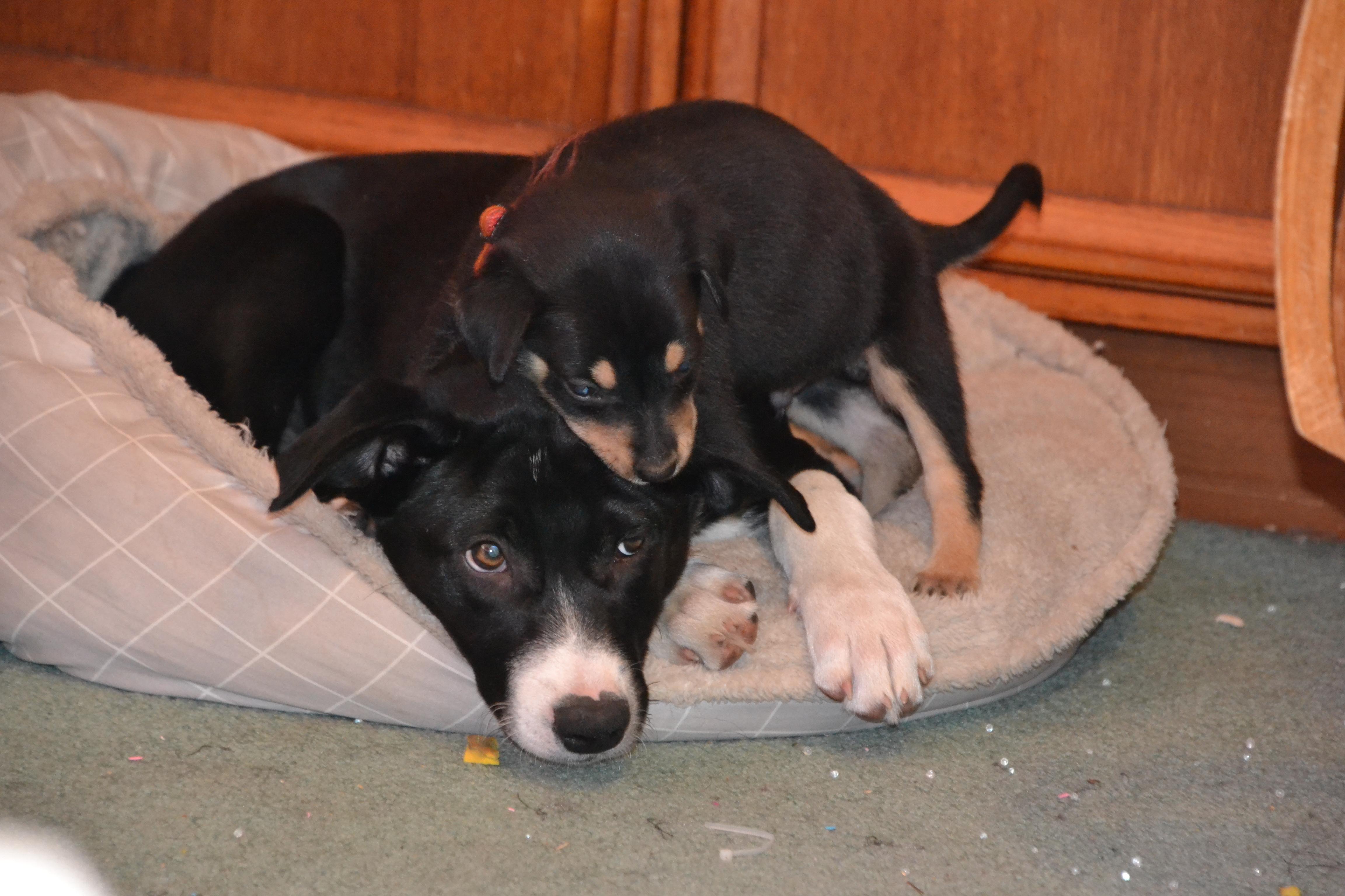 Zac & Dobbie
