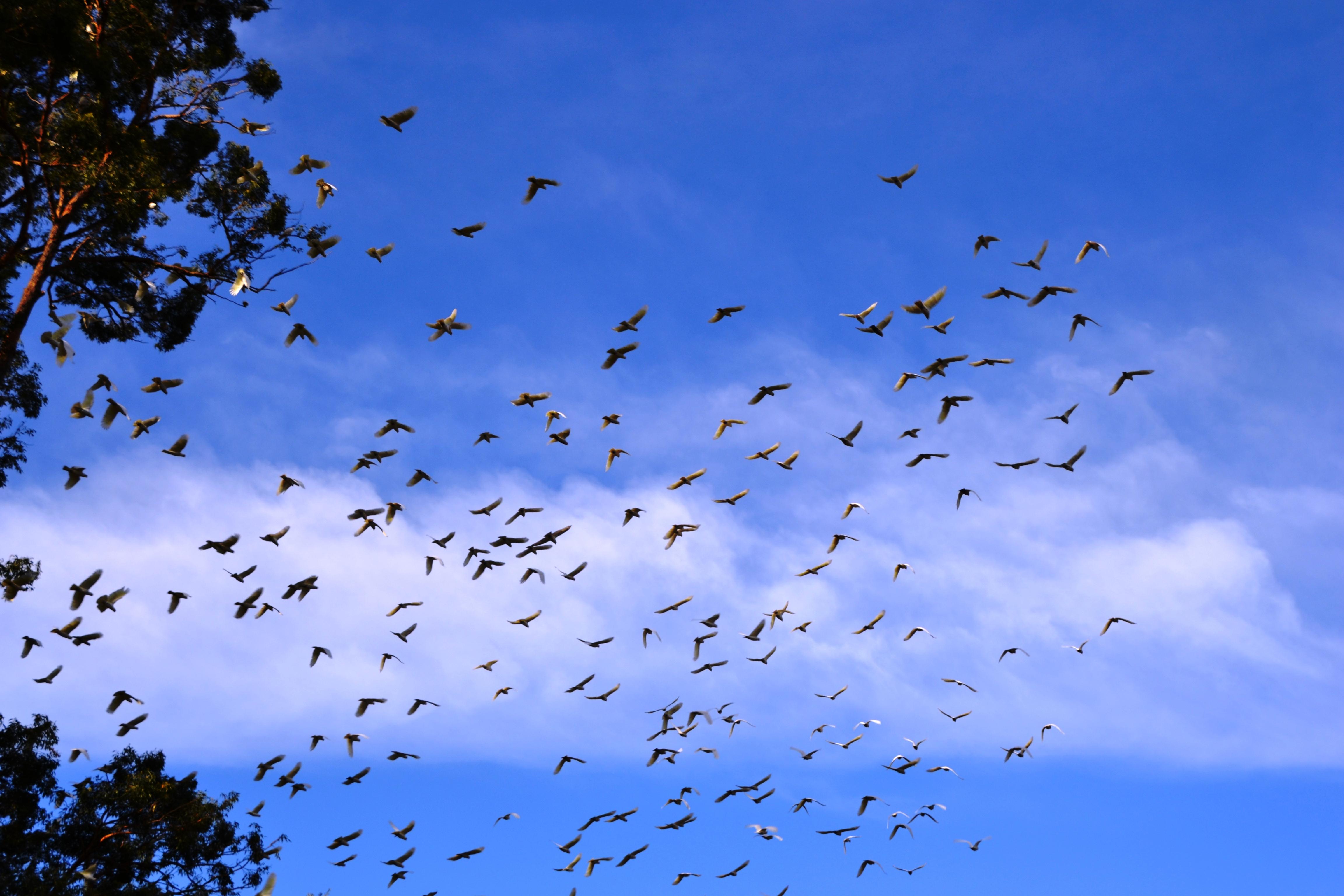 a million birds take flight.JPG