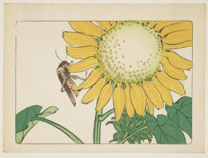 grasshopper-and-sunflower-1877
