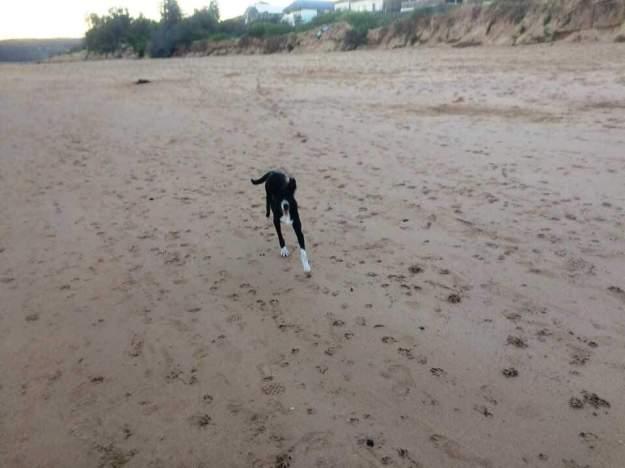 Zac running at Ocean beach May 18