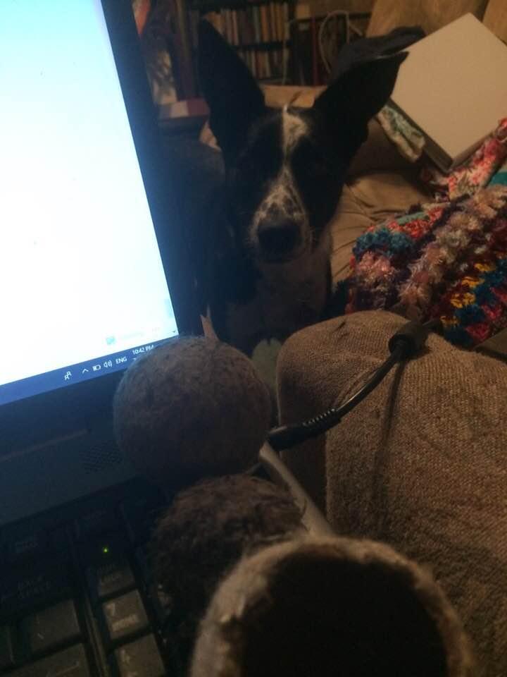 Rosie tennis balls laptop