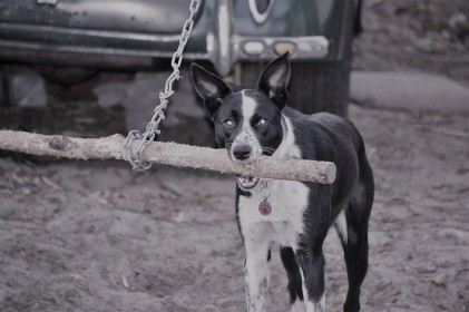Rosie with Stick Swing