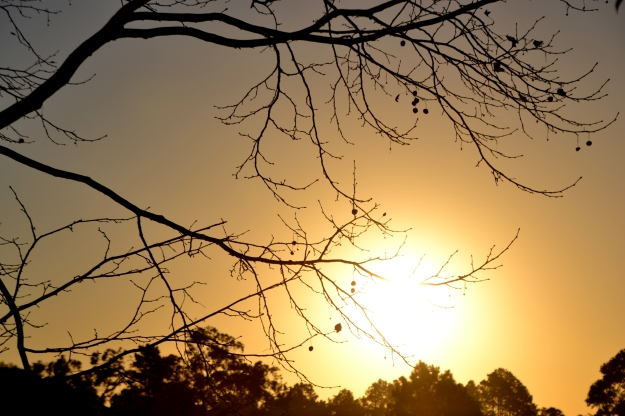 sunset twigs wide