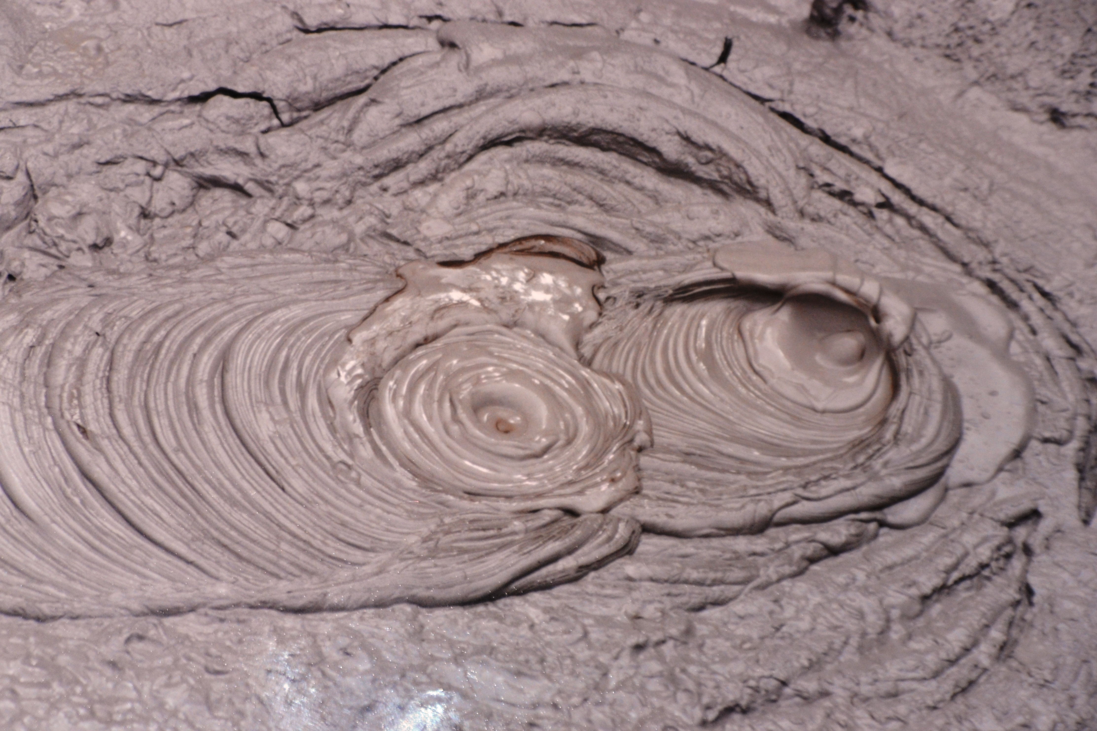 Rotorua Mud