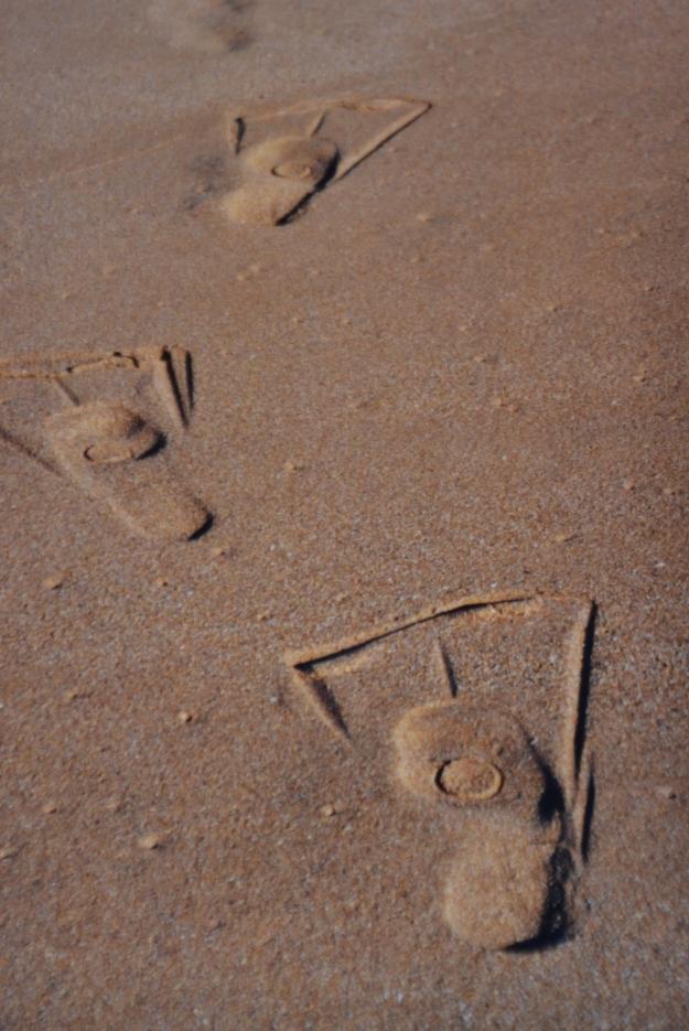 Whale Beach Feet